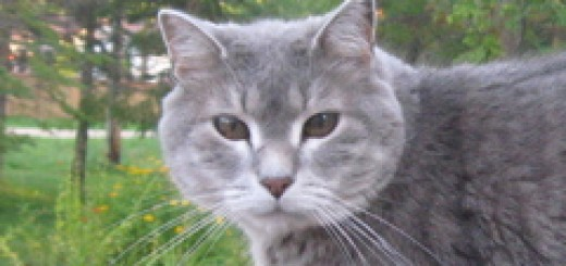 Junior was a great cat.