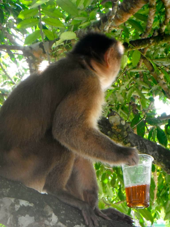 monkeys-of-Misahualli