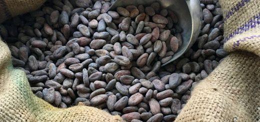 aschenti-cocoa