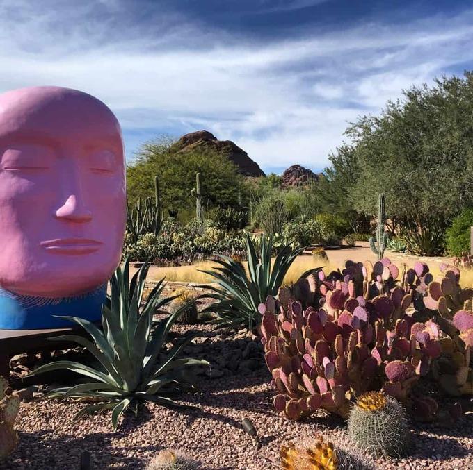 desert-botanical-garden