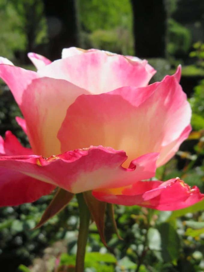 filoli-garden