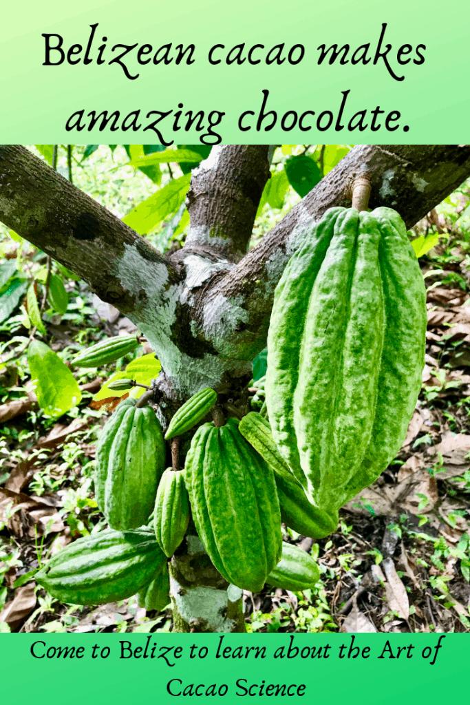 belize-cocoa